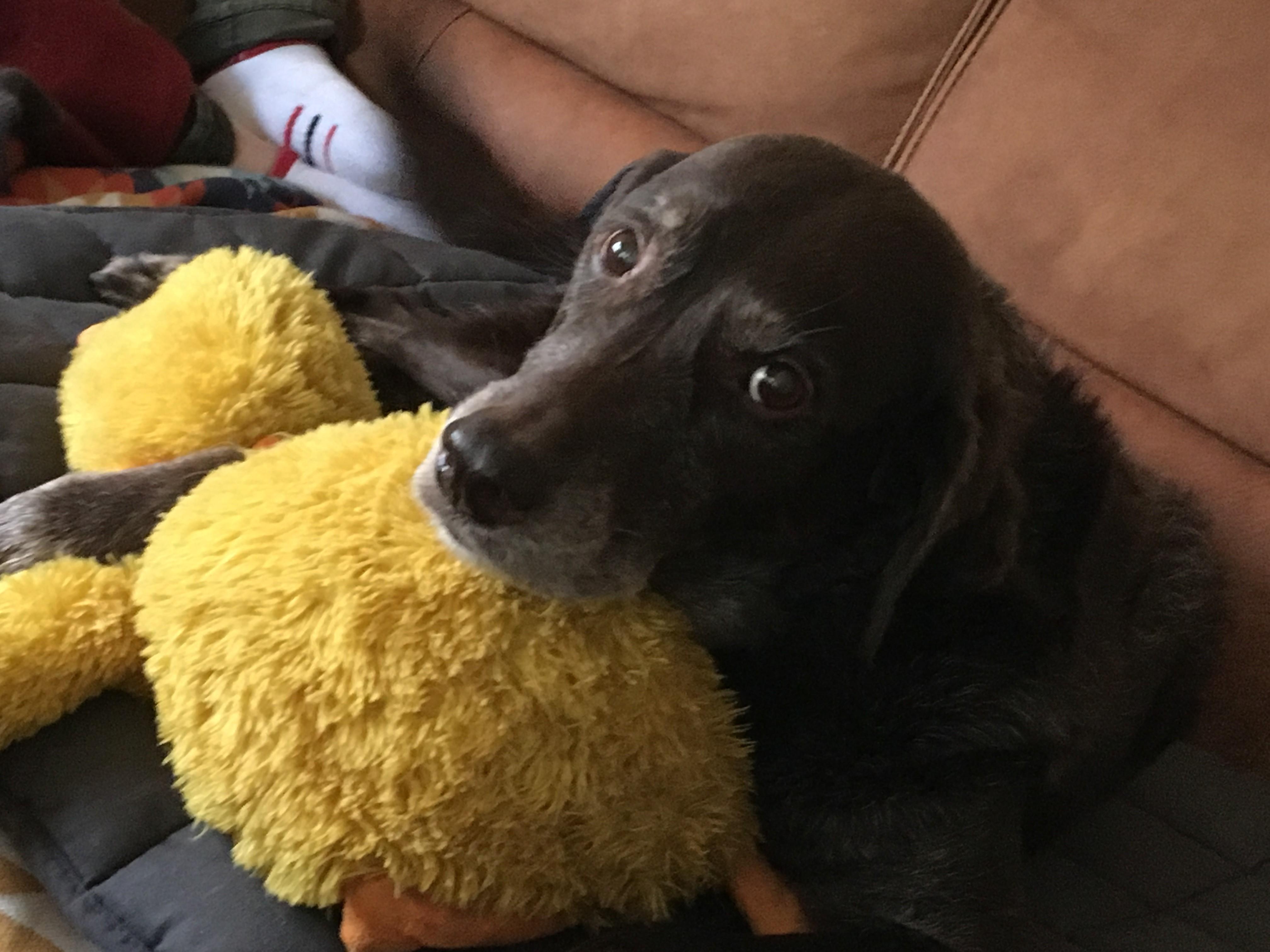 Gestorben worte hund tröstende Trauersprüche Hund: